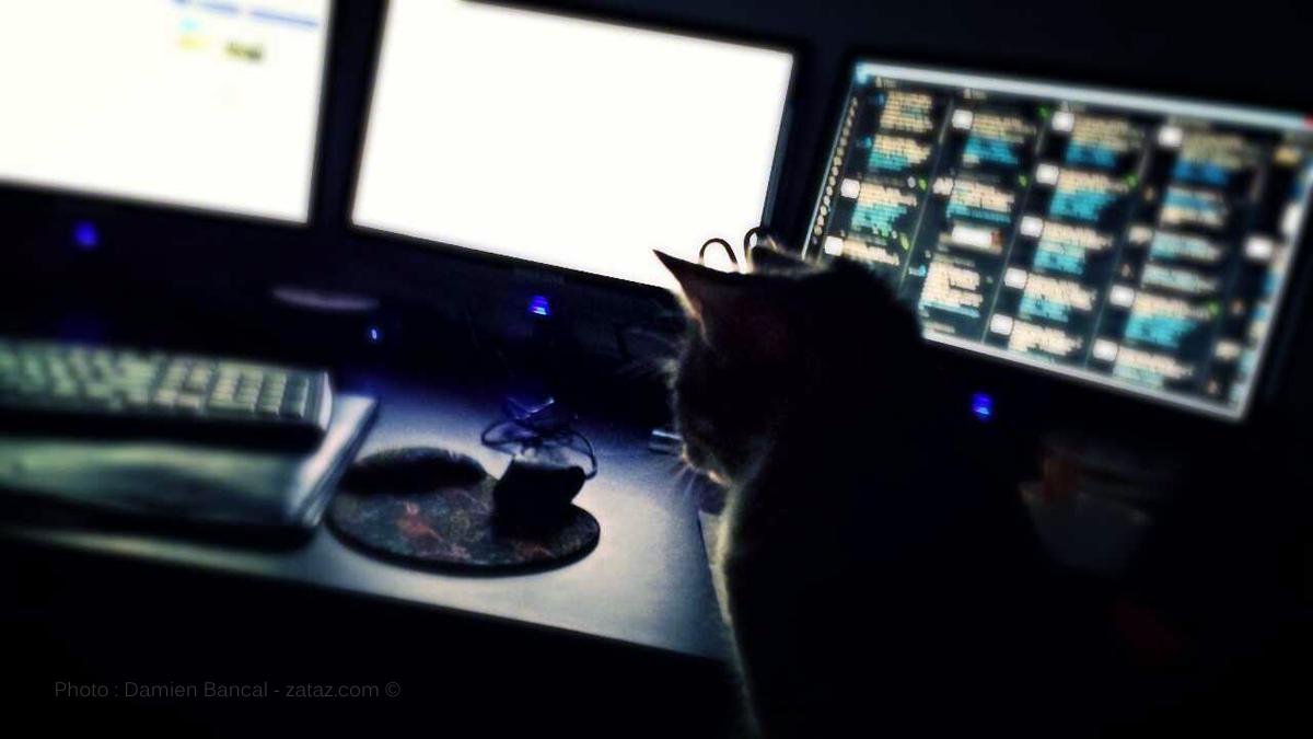 Un véritable jeu du chat et de la souris entre les pirates et le reste du monde.